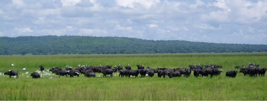 katavi-national-park-tanzania-safaris