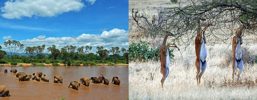 samburu-game-reserve-kenya-safaris