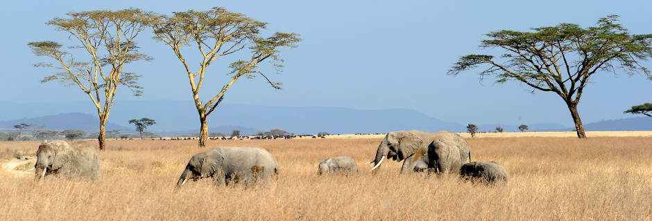 tanzania-safari-holiday