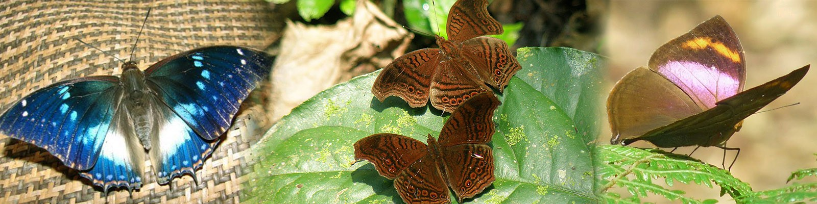 bwindi-impenetrable-forest-national-park-buterflies