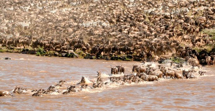 great-wildebeest-migration